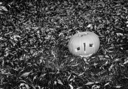 Trick or Treat, pumpkin on grass in the park, Halloween concept