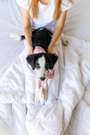 Selektive Fokussierung des kleinen Welpen, der zusammen mit einer Frau zu Hause im Bett liegt