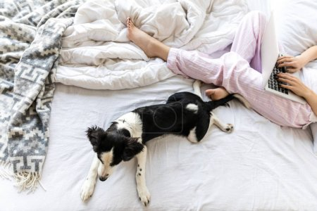 selective focus of cute black and white puppy lying on bed near woman with laptop