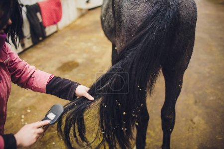 rider master woman caressing and grooming black horse.