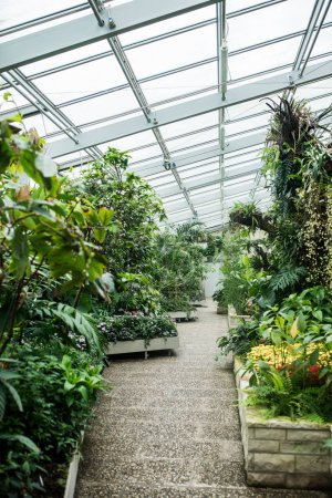 Beautiful public greenhouse with green plants