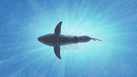 The Great White Shark in the Ocean Side View