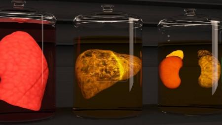 Human Organs in Science Laboratory Glasses