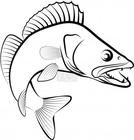 Zander fish - clip art illustration...