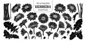 Set of isolated silhouette gerbera in 26 styles