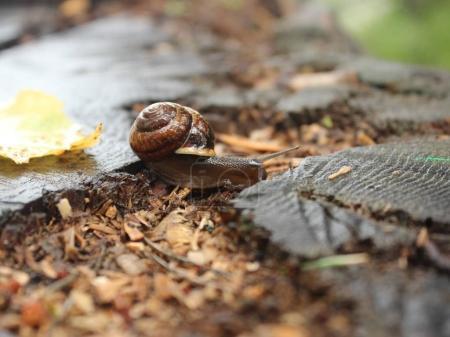 snailon a stump