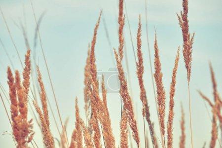 Photo pour Fleurs et plantes de fond - image libre de droit