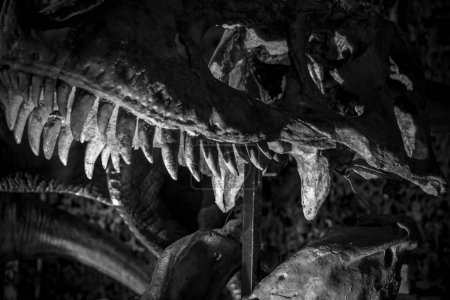 Tyrannosaurus rex dinosaur with tusks, long, sharp teeth