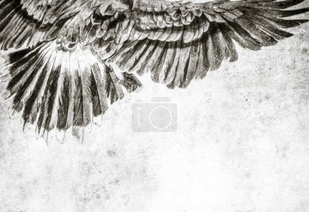 Photo for Sketch made with digital tablet of american eagle - Royalty Free Image