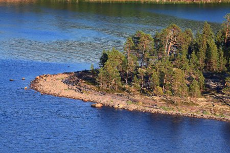 shore water and  coniferous forest