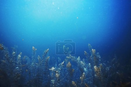 Seabed with algae and corals