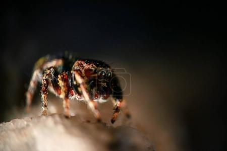 insect, spider, macro