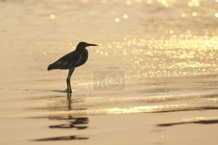 A bird is walking on the beach
