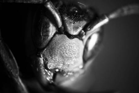 moelleux araignée semble droite