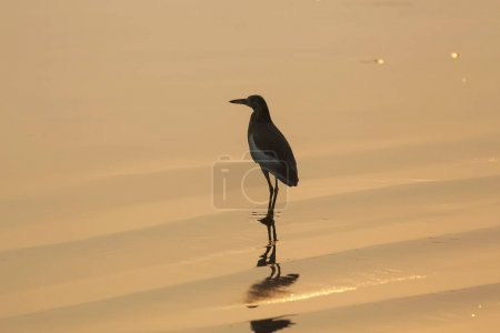 A bird is walking on the beach