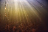 rays of light underwater fresh lake, abstract background nature landscape sun water