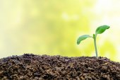Sprout growing from soil on blurred natural background for green environment concept
