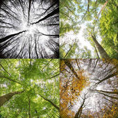 Four season in forest