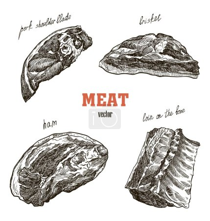 meat products sketches