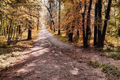 Sunny forest pathway