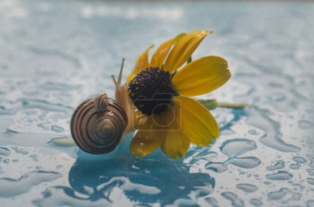 snail on a flower