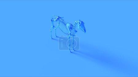 Photo pour Modèle anatomique de système squelettique de cheval bleu Illustration 3d rendu 3d - image libre de droit