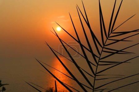 Photo pour Beau coucher de soleil orange sur l'océan. Silhouette d'une feuille de palmier dans les rayons du soleil couchant . - image libre de droit
