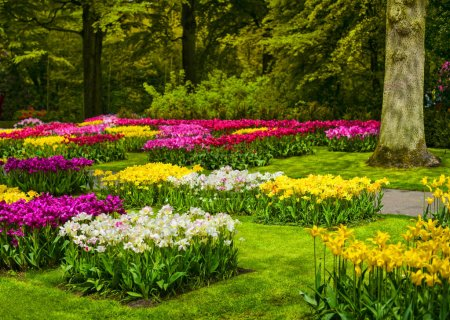 Garden in Keukenhof, colorful tulip flowers and trees. Netherlan