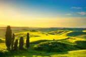 Tuscany, rural sunset landscape. White road and cypress trees. V