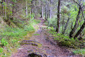 pathway in the forest