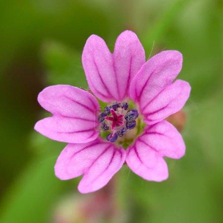little spring flower in field