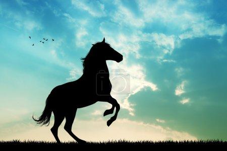 Photo pour Illustration de beau cheval au coucher du soleil - image libre de droit