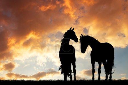 Photo pour Illustration de la silhouette des chevaux amoureux au coucher du soleil - image libre de droit