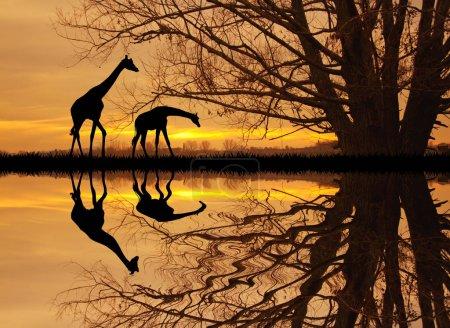 giraffe in African landscape
