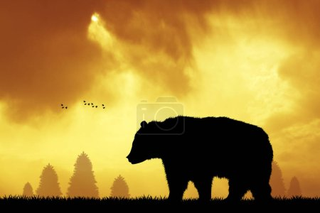 brown bear in the forest at sunset