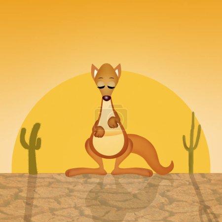 kangaroo in the desert