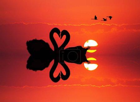 Photo pour Illustration de cygnes amoureux au coucher du soleil - image libre de droit