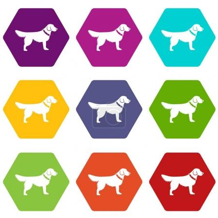 Dog icon set many color hexahedron isolated on whi...