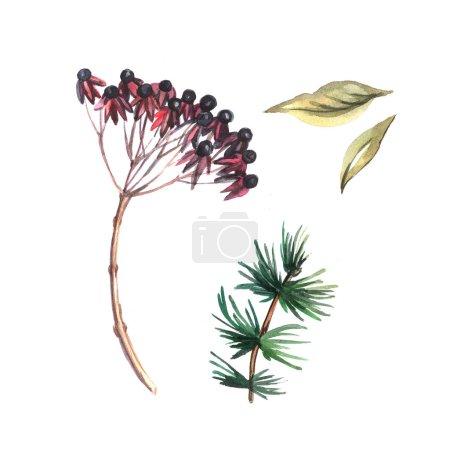 Watercolor floral sketches