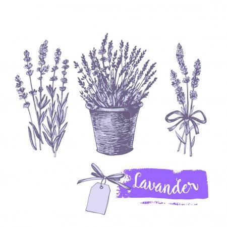 Graphic lavender set