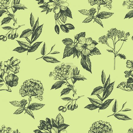 botanical plant sketches