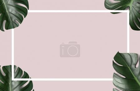 green tropical leaves with white paper frame on pink background