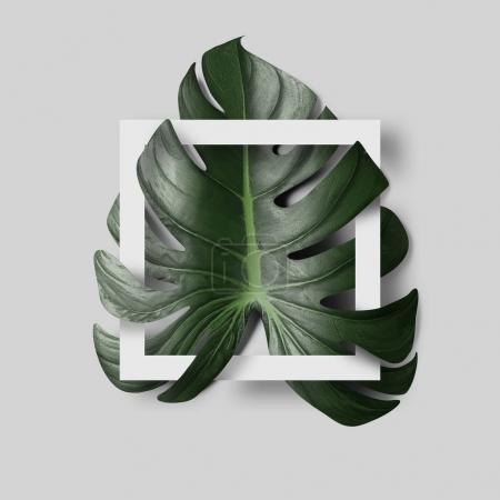 Photo pour Feuille tropicale verte avec cadre blanc noir sur fond clair - image libre de droit