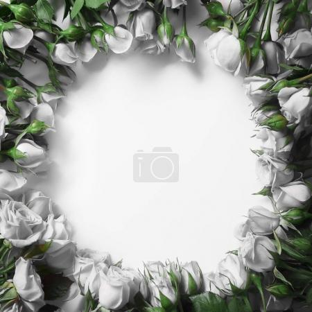 beautiful white rose flowers in form of rounded frame isolated on white background