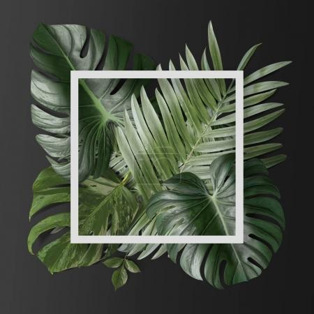 green tropical leaves with white paper frame on grey background