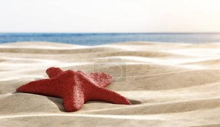red starfish on sandy beach, close up with copy space