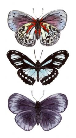 watercolor illustration insects butterflies.