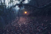Vintage lantern and path through old foggy forest