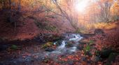 Small creek at autumn color forest
