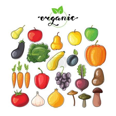Illustration pour Ensemble vectoriel de fruits et légumes plats. Éléments alimentaires biologiques avec lettrage - image libre de droit